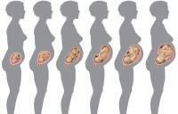 Развитие ребенка во время беременности: процесс в течение всего периода